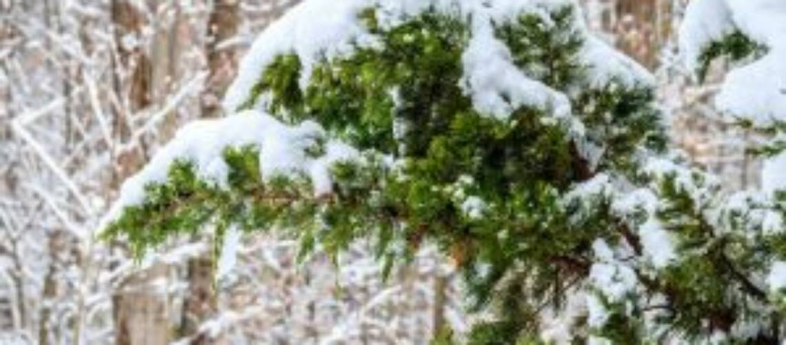 Озеленяване София