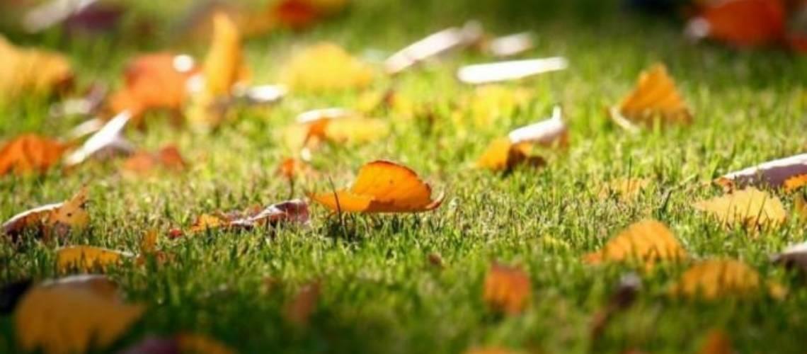 Озеленяване на градина Green WorldОзеленяване и поддръжка на градини Green World