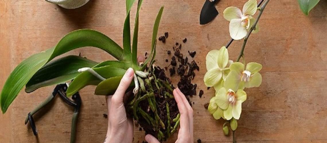 Градинарски услуги Green World